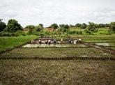 Agriculture durable : une nécessité pour les pays émergents