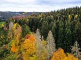 CAMBIO: le rôle de la diversité des arbres dans la lutte contre le changement climatique