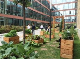 Les Graines des Moulins, an urban vegetable garden at BNP Paribas Securities Services