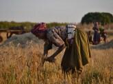 Changement climatique : stimuler des programmes d'adaptation efficaces en Afrique