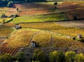Etude Agrifrance 2016