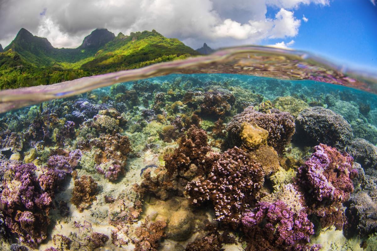 reef services  understanding the impact of coral reefs