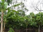 SoCa: soil carbon for tropical subsistence farming