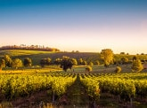 Agrifrance 2018 rural report: Digital Technology is Revolutionising the World's Wine