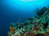 Journée Mondiale de L'Océan : préservons le plus vaste écosystème de notre planète