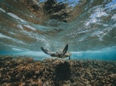 2018, an important year in the fight for the protection of coral reefs