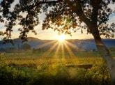 Agrifrance 2017 rural report: The US wine market