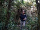 L'avenir des forêts tropicales sous pression du réchauffement planétaire