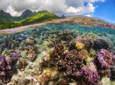 REEF Services:  understanding the impact of coral reefs